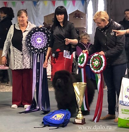 Chow-chow Legend of The Black Diamond dei Leoni Imperiali